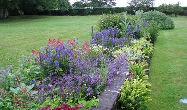 Top 10 plants for cottage style borders